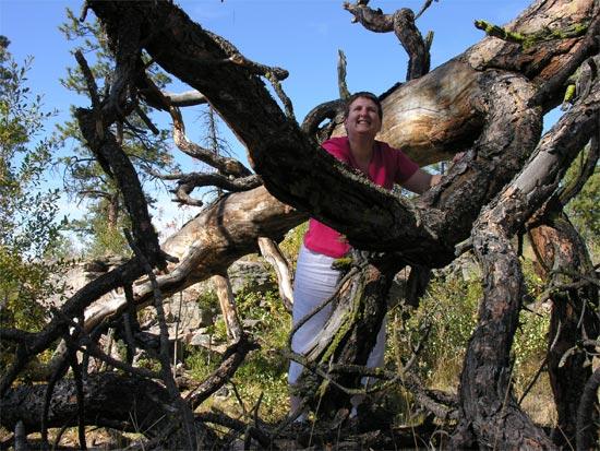 Jill in Tree